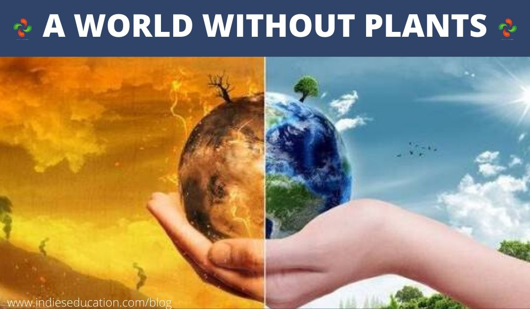 A World Without Plants