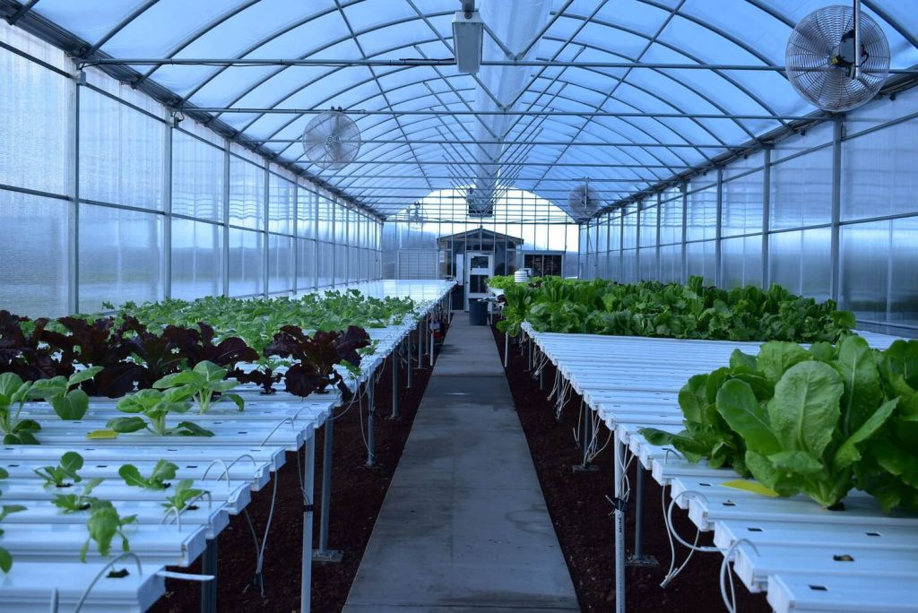 greenhouse for hydroponics system